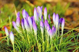 ここにも春